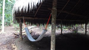 My accommodation in the jungle near San Pedro, Iquitos, Peru