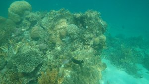 Snorkeling; Island hopping tour from Port Barton, Palawan